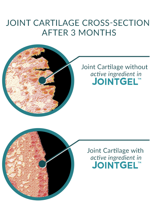 JointGel Joint Cartilage